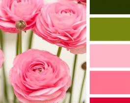 Bộ Color Palettes Hơn 30 Loài Hoa